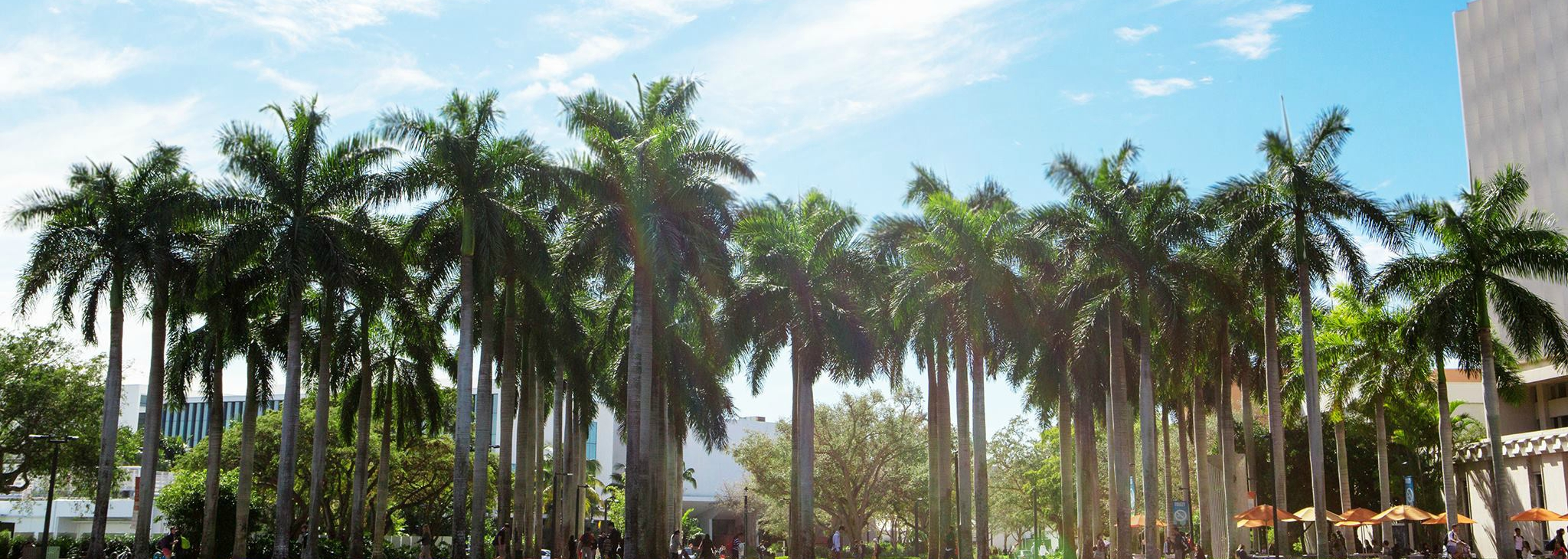 Campus palm trees